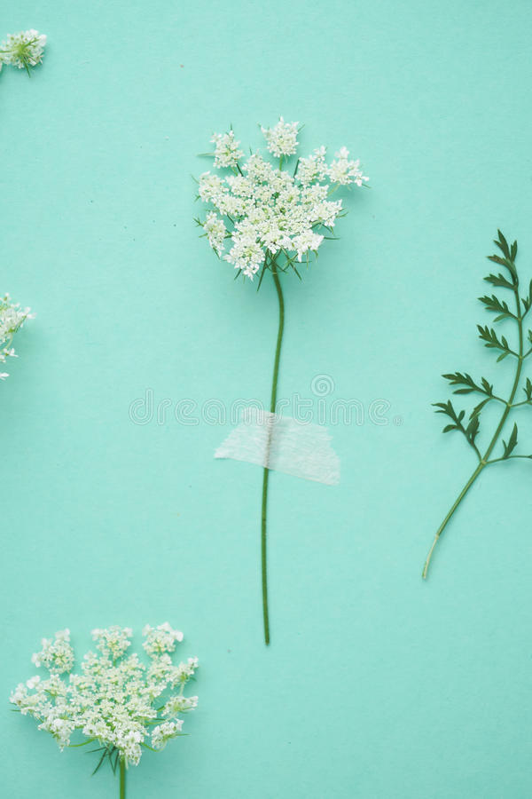 Liten vit blomma på den gröna lägenheten arkivbilder