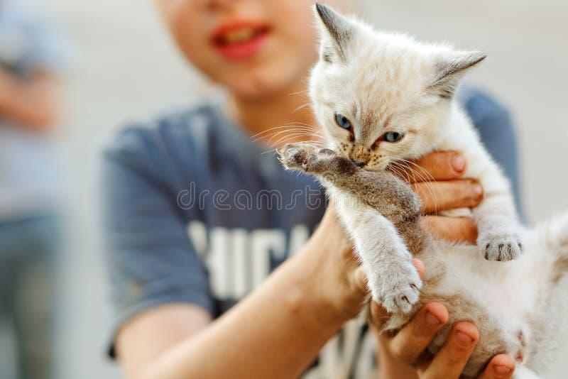 Liten vit lös kattunge som sitter på händerna av en pojke N?rbild Begrepp f?r djur omsorg royaltyfri foto