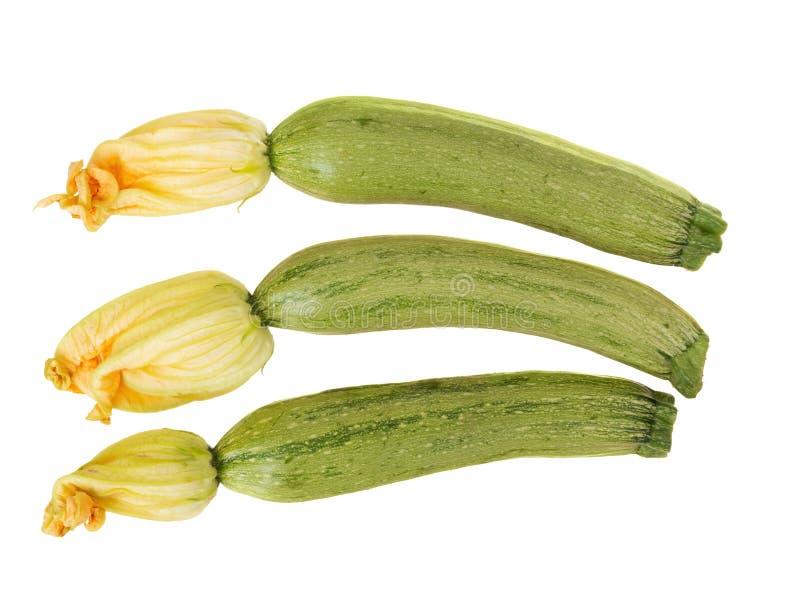 Liten zucchini med blommor som isoleras på vit bakgrund royaltyfri foto