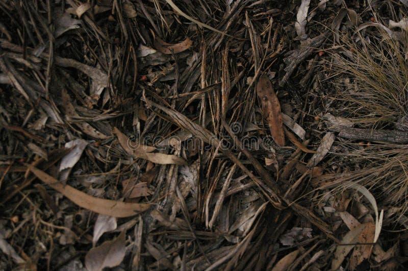 Litera australiana nativa local de la hoja con las ramas y las hojas de árbol de goma en la tierra en un área del bosque, Nuevo G imagenes de archivo