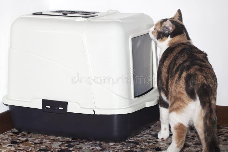 Litera de gato foto de archivo libre de regalías