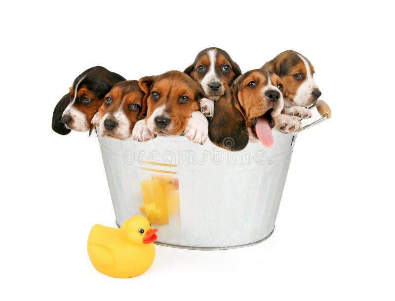 Litera de perritos en una bañera imágenes de archivo libres de regalías