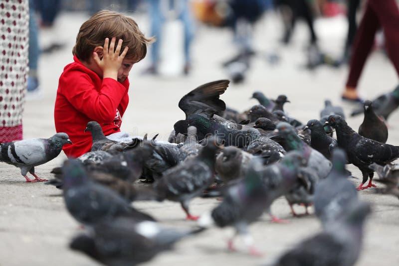 Litet barn som matar duvorna royaltyfri bild