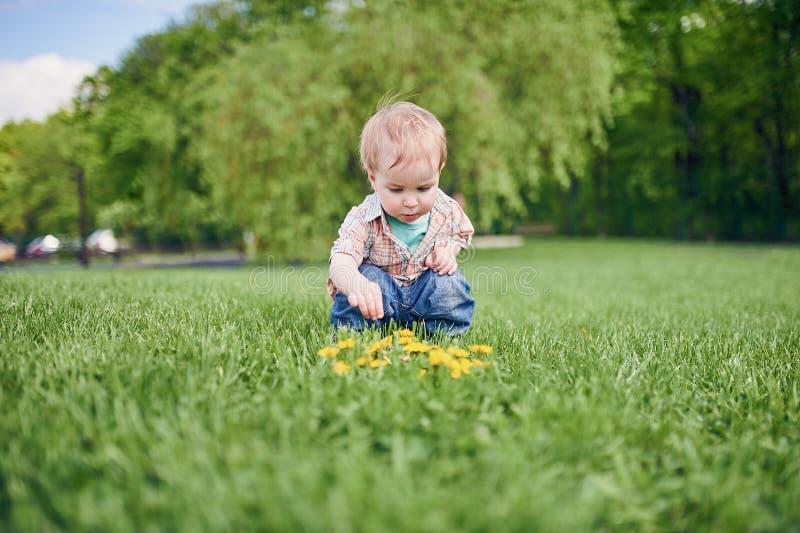 Litet barn som sitter p? den gr?na gr?smattan och blickarna p? de gula maskrosorna solig dag royaltyfri foto