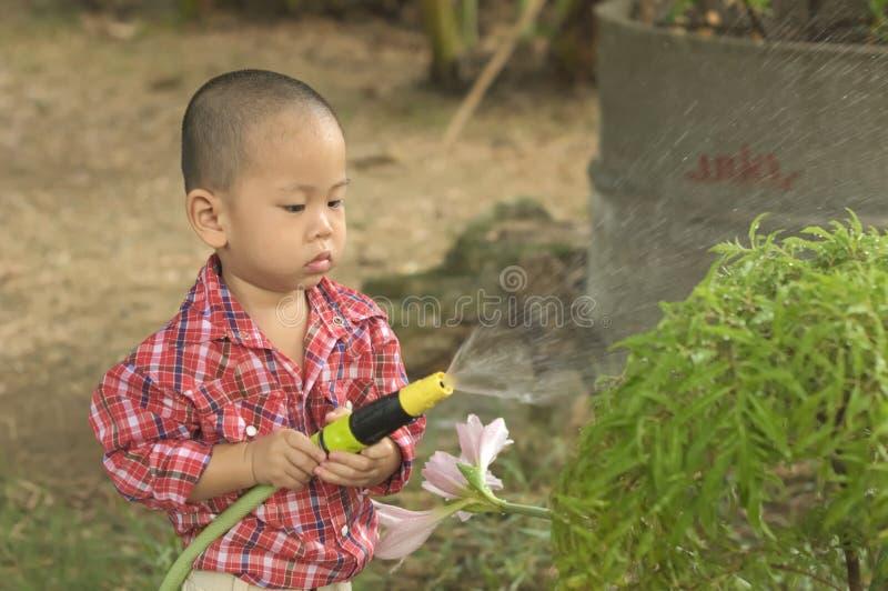 Litet barnfärgstänkvatten över växten royaltyfri bild