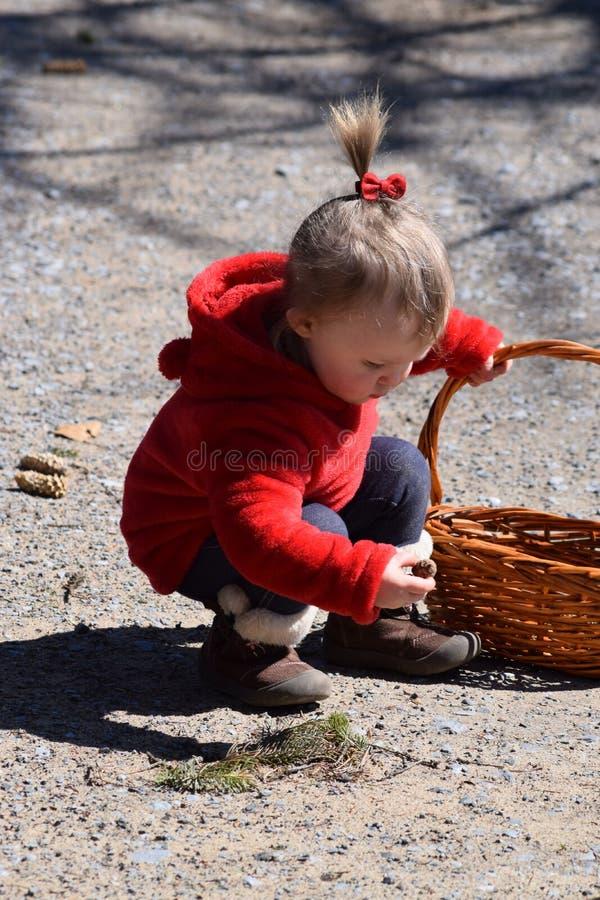 Litet barnflicka som samlar till korgen arkivfoton