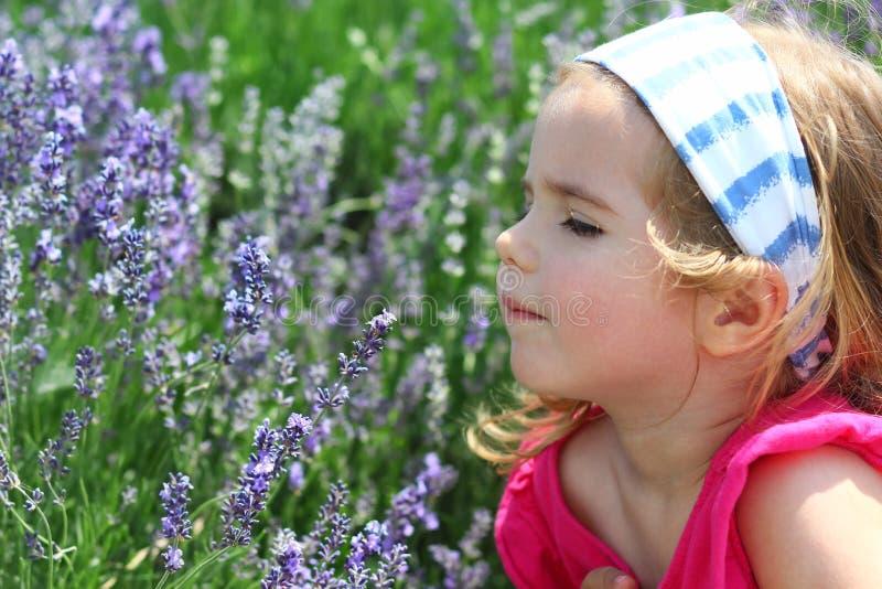 Litet barnflicka som tycker om lavendelfältlukten, closeupstående royaltyfria foton