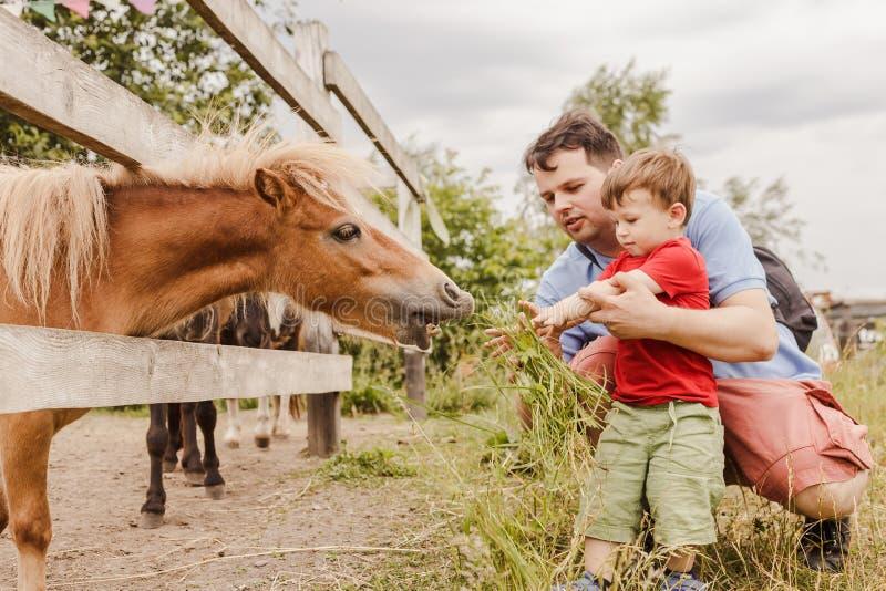 Litet barnpojke och hans fader som matar en ponny på lantgården royaltyfri foto