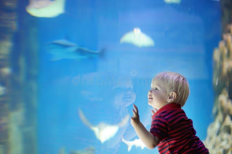 Litet barnpojken håller ögonen på fiskar royaltyfri fotografi