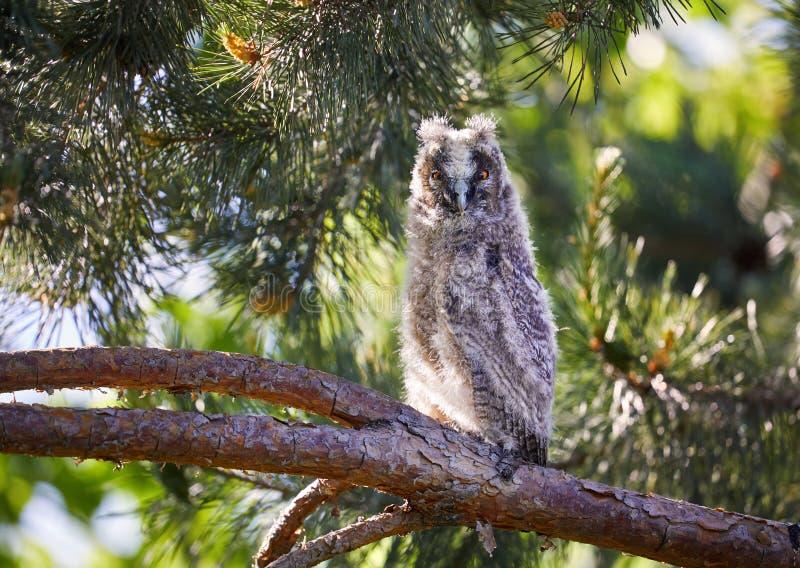 Litet behandla som ett barn ugglan i skogen royaltyfria foton
