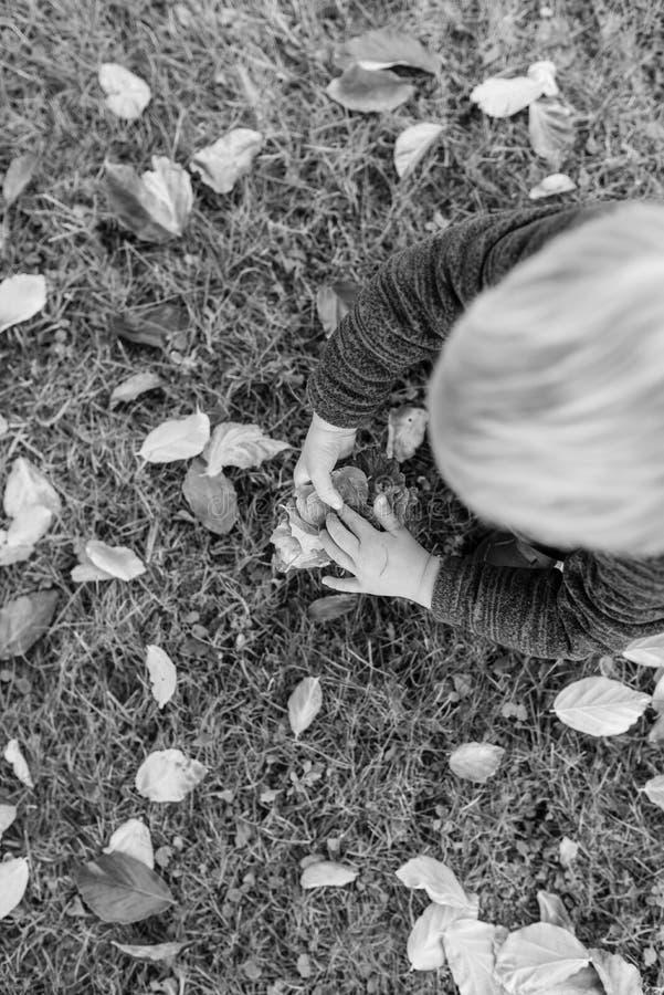 Litet blont barn som samlar höstsidor arkivbild