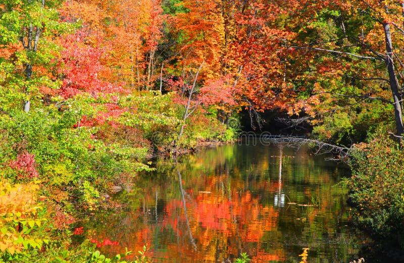 Litet damm i New England arkivbild