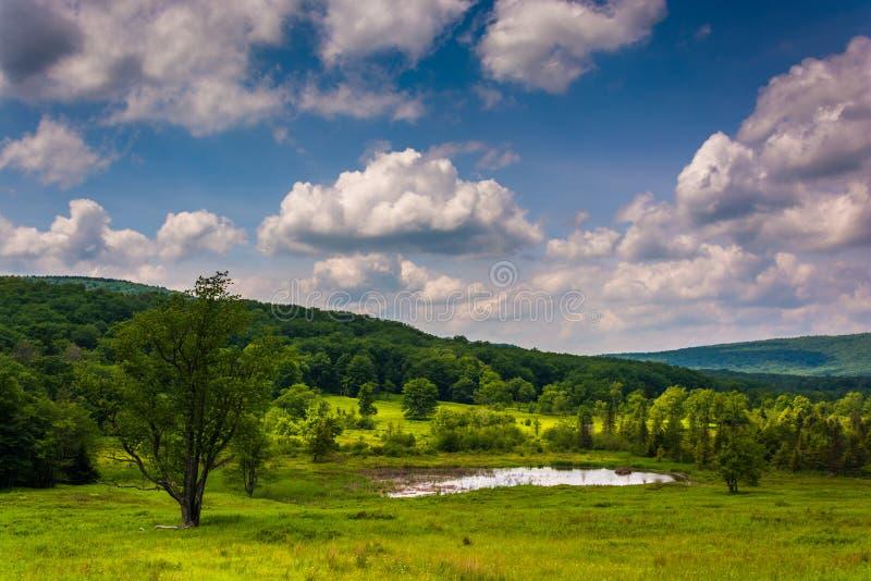 Litet damm på Canaan Valley State Park, West Virginia arkivbilder
