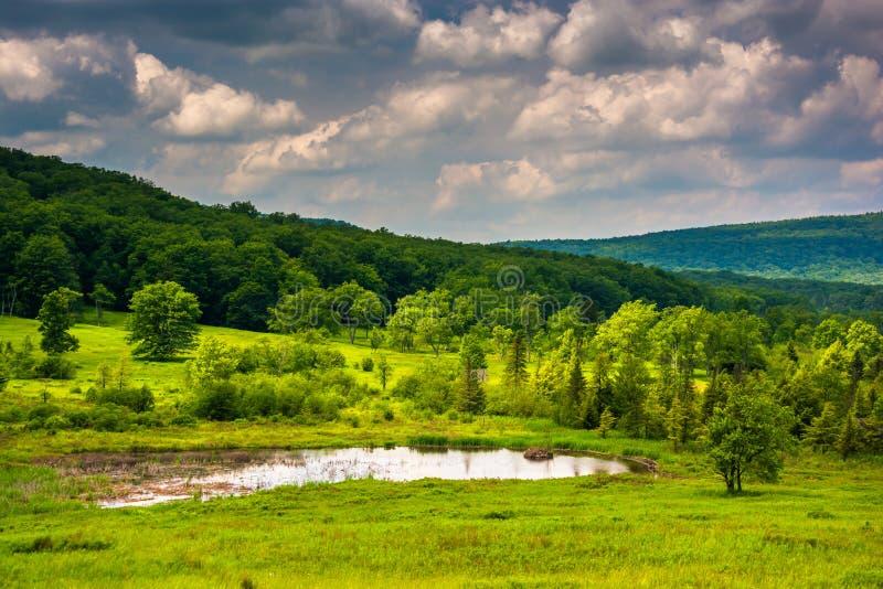 Litet damm på Canaan Valley State Park, West Virginia royaltyfri foto