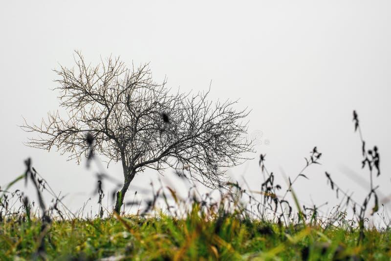 Litet ensamt träd royaltyfria foton