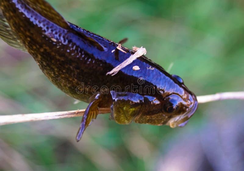 Litet fiskmakrofoto royaltyfri bild