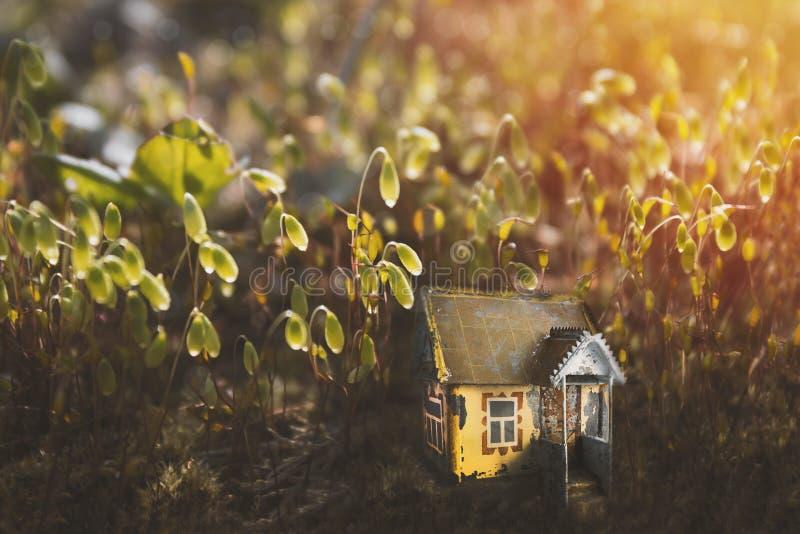 Litet gammalt magiskt fe- eller älvahus i mossa i skogsolskenet i aftonen Sagolik magisk glänta i sagaskogen royaltyfria bilder