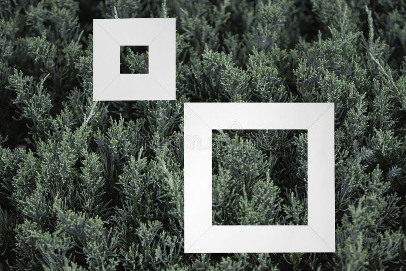 Litet grönt buskeslut upp bakgrundstexturbakgrunden med vit arkivfoto