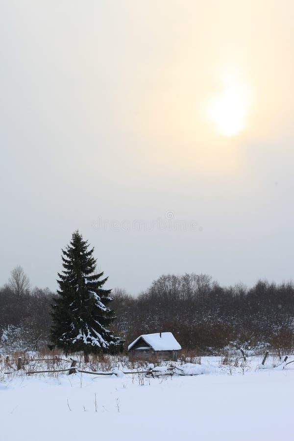 Litet hus i vinterskogen under träd royaltyfri bild