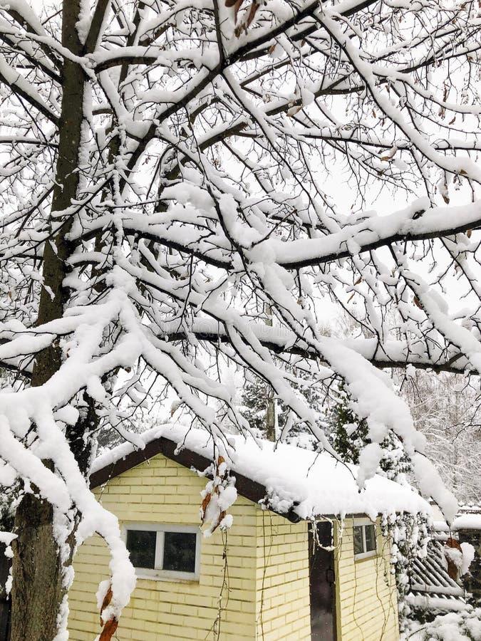 Litet hus och träd under insnöad vinter arkivbilder