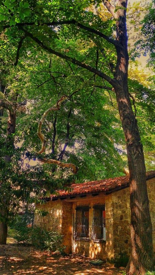 litet hus på skogen! royaltyfri bild