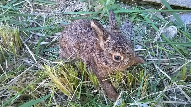 Litet kaninnederlag i gräset royaltyfri bild