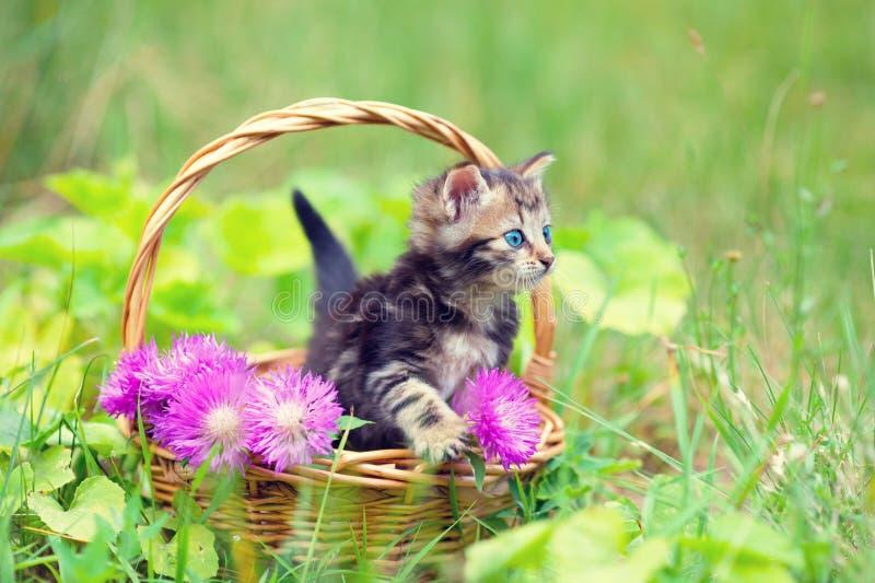 Litet kattungesammanträde i en korg arkivfoton