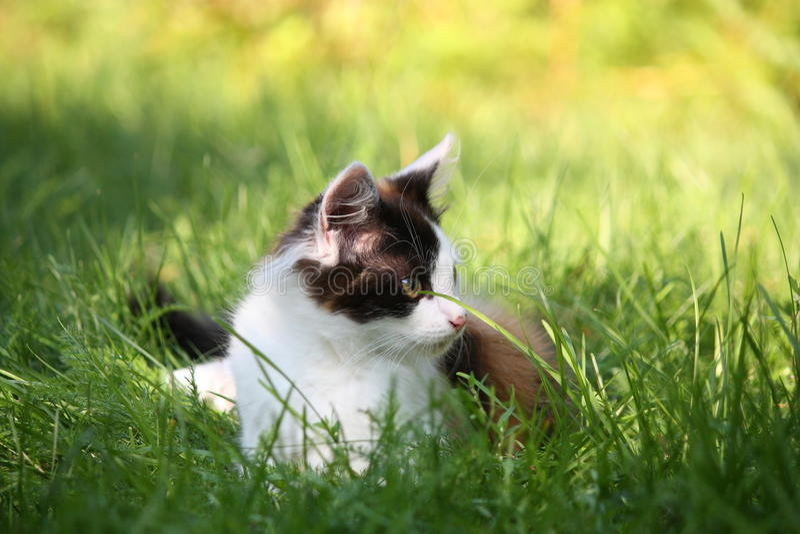 Litet kattungesammanträde i gräset royaltyfri foto
