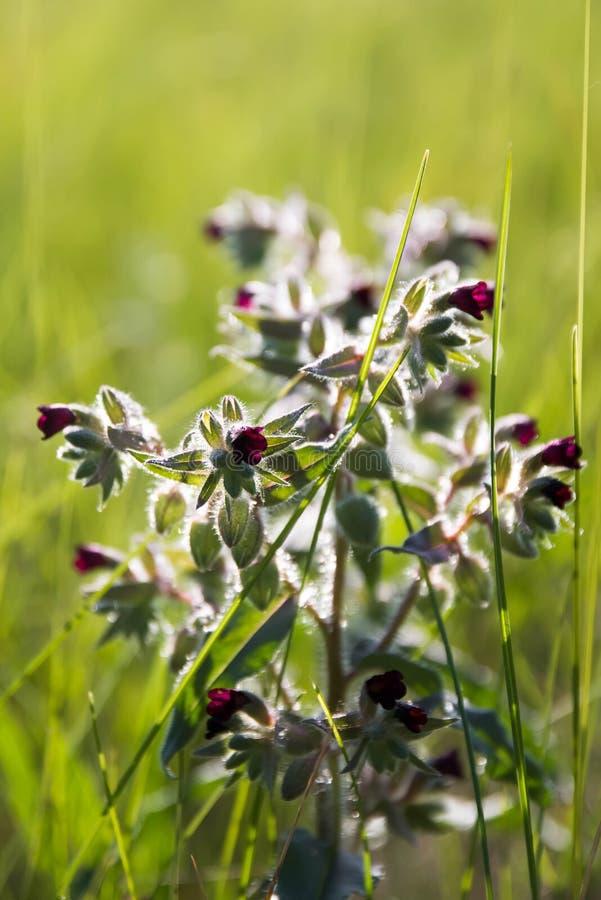 Litet och att blomma blommor, på en grön äng arkivbilder