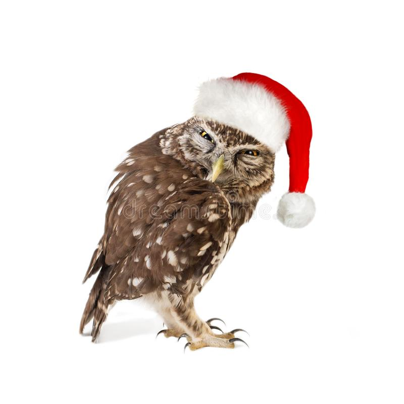 Litet Owl Athene noctuaanseende med den santa hatten bakgrund isolerad white arkivbilder