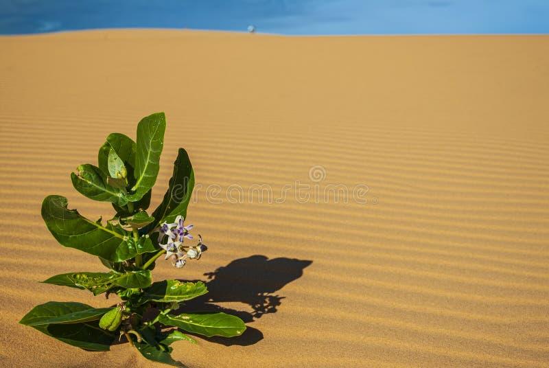 Litet på öknen arkivfoton
