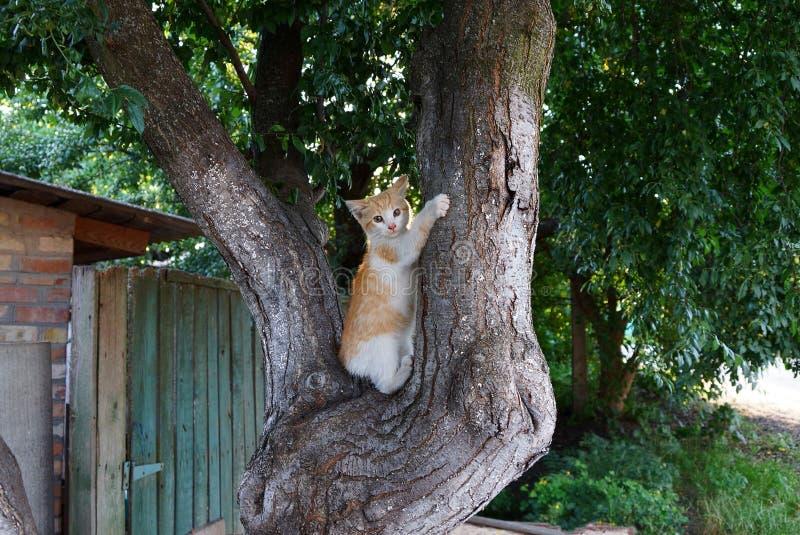 Litet prickigt kattsammanträde på den gråa stammen av ett träd royaltyfri foto