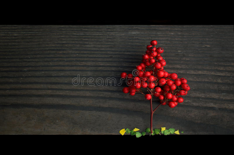 Litet rött träd royaltyfria bilder