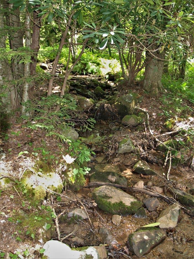 Litet Rocky Stream längs kabinliten vikslingan Grayson Highlands State Park royaltyfri bild