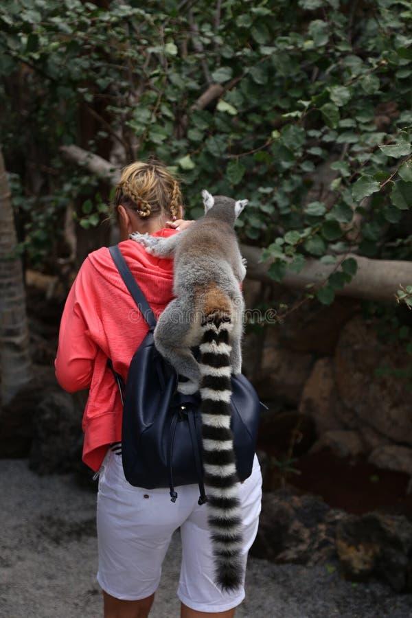 Litet roligt djurt däggdjur Afrika för maki med folk arkivfoto