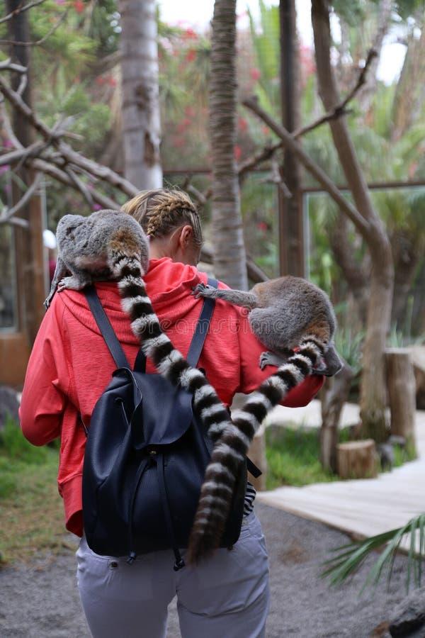 Litet roligt djurt däggdjur Afrika för maki med folk royaltyfri bild