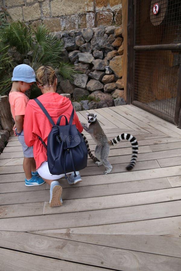 Litet roligt djurt däggdjur Afrika för maki med folk royaltyfri fotografi