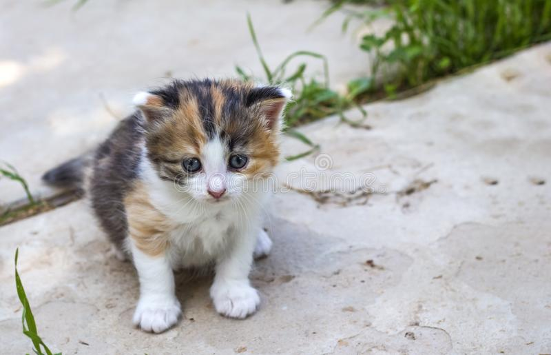 Litet roligt gulligt härligt sammanträde för kattunge mycket på gatan fotografering för bildbyråer