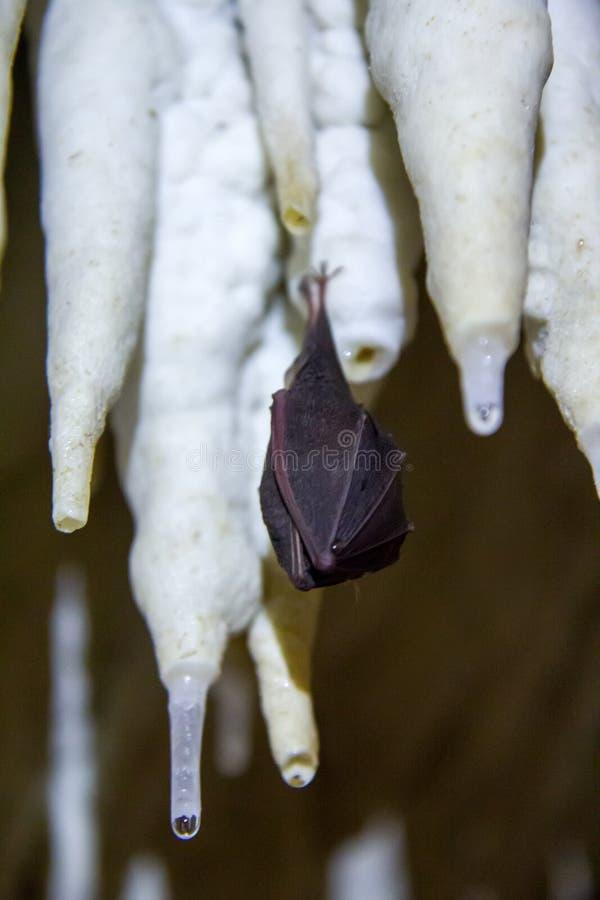 Litet slagträ i grottan fotografering för bildbyråer