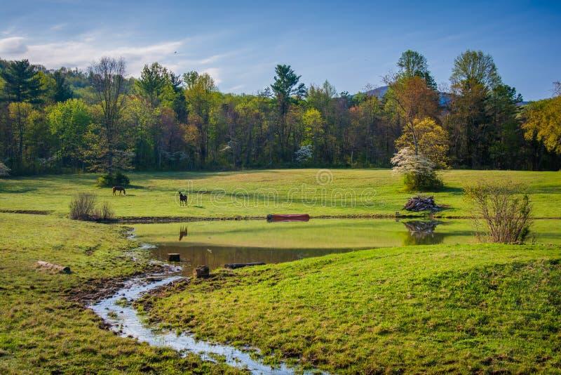 Litet ström och damm i det lantliga Shenandoahet Valley av Virginia arkivfoto