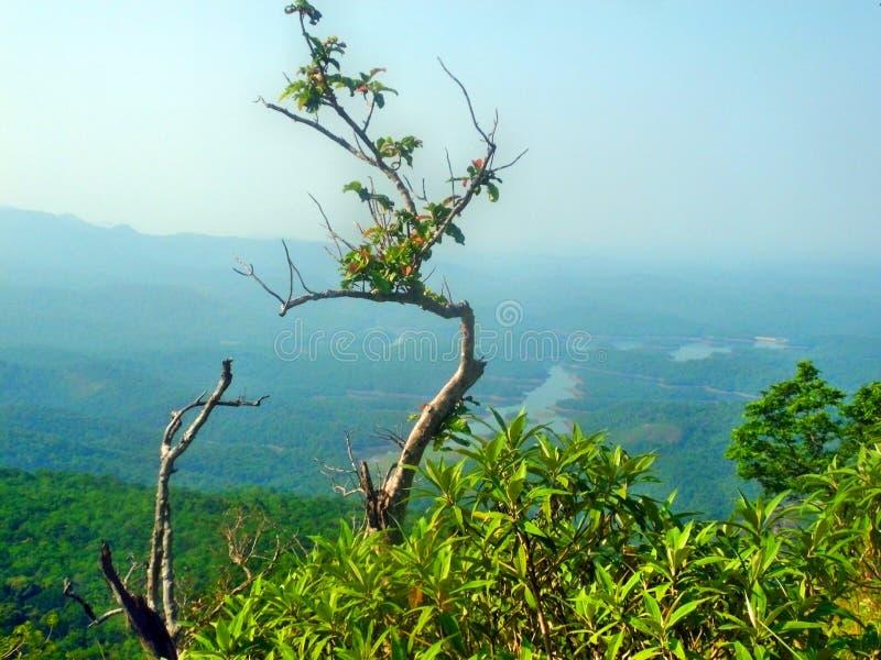 Litet träd i berget royaltyfria foton