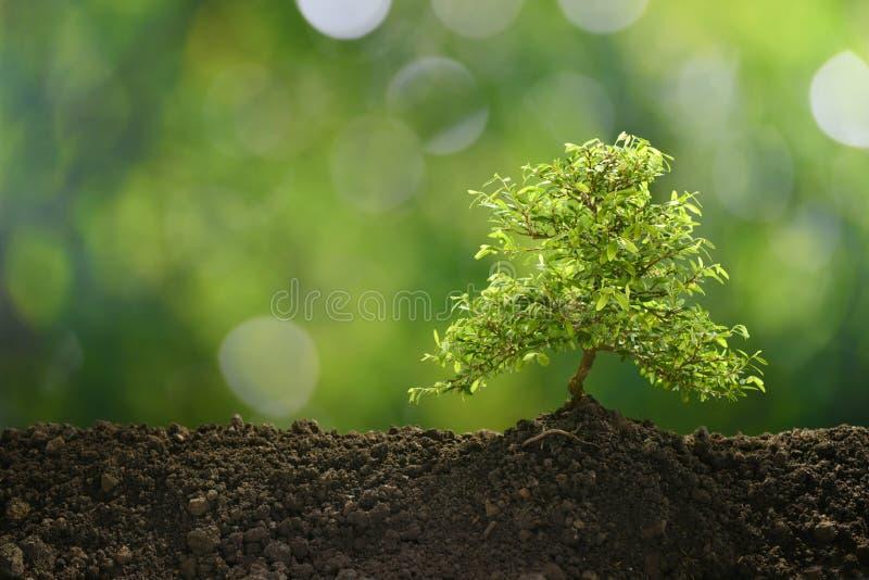 Litet träd i ljust växa för morgon royaltyfria bilder
