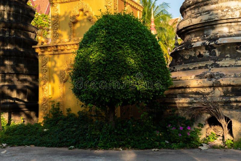Litet träd i trädgården royaltyfri fotografi