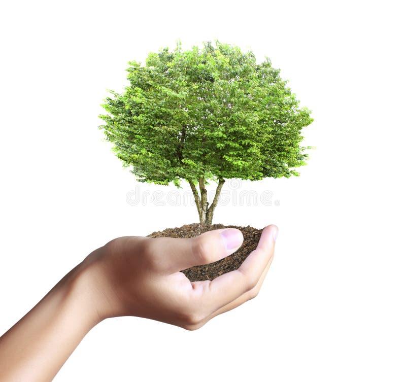 Litet träd, växt i hand royaltyfri fotografi