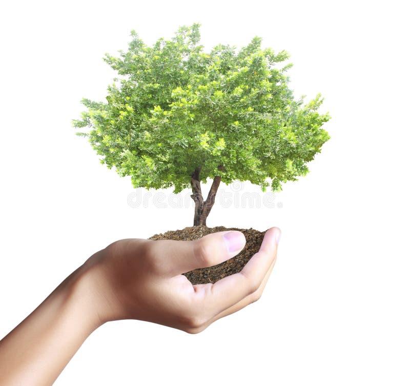 Litet träd, växt i hand fotografering för bildbyråer