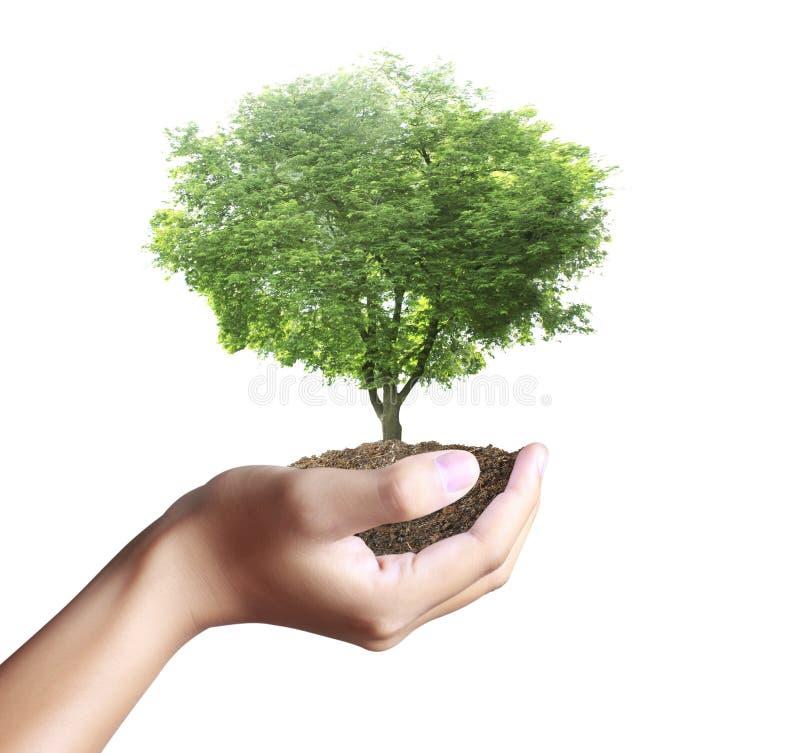 Litet träd, växt i hand royaltyfria foton