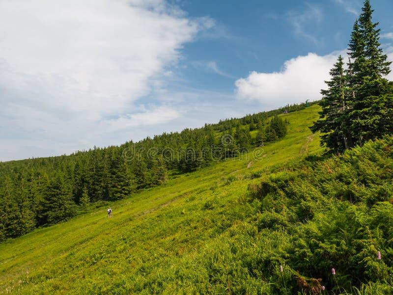 Litet trähus under ett träd i bergen arkivfoton