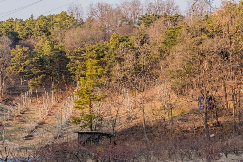 Litet vintergrönt träd royaltyfri bild