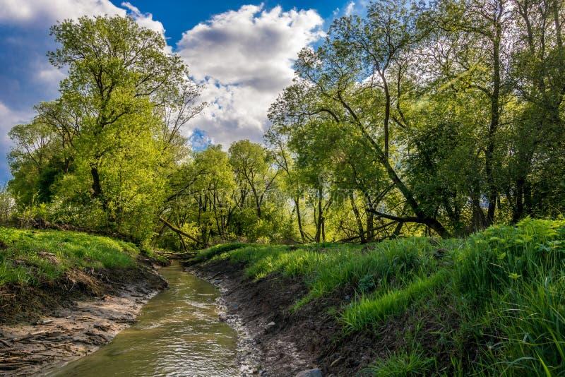 Litewska dżungla zdjęcie royalty free