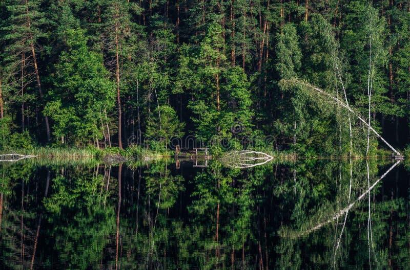 Litewski jezioro z brzozy drzewem i odbicie Na wodzie Piękny krajobraz zdjęcie stock